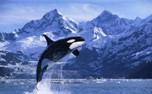 Orca Welfare and Safety Act: It's Time To End The Cruelty